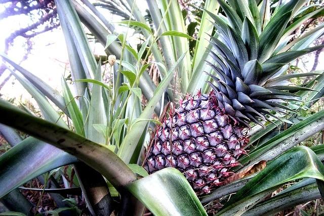 Ananas-Madhessentielles